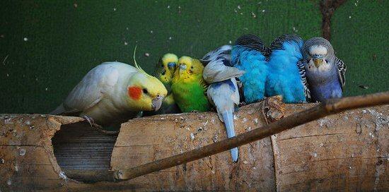 Частая причина аллергического насморка у беременных - птичий пух
