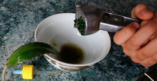 Сок из листьев бриофиллума