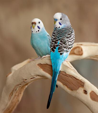 Птицы - частый источник аллергии