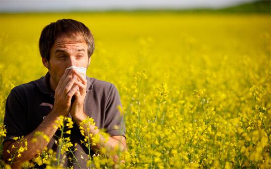пыльца как причина возникновения аллергического насморка