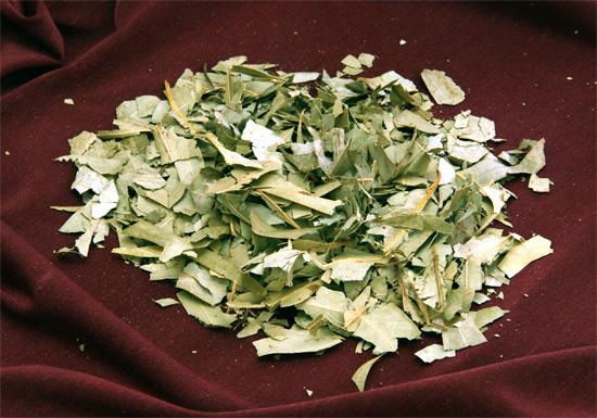 Сухие листья эвкалипта