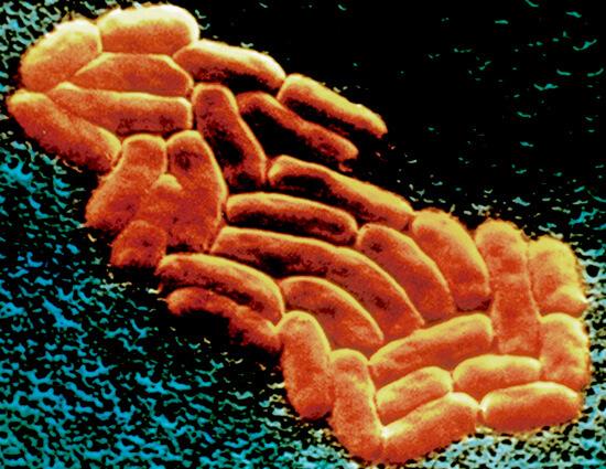 Клебсиелла пневмонии, вызывающая ринит