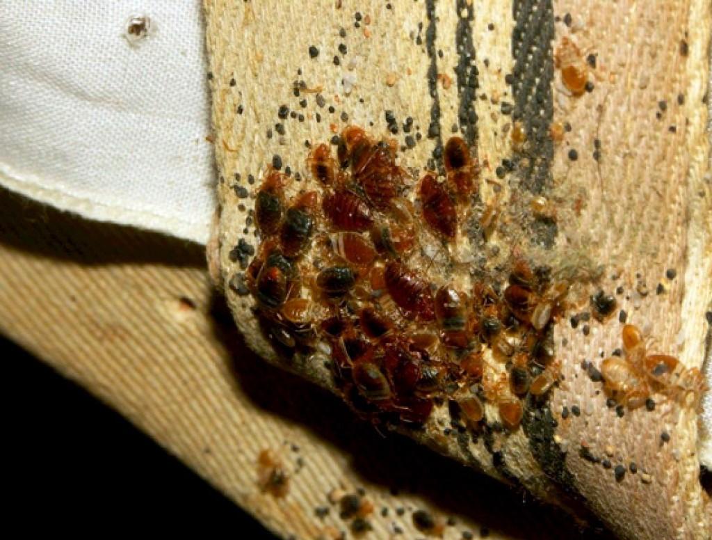 вывести паразитов из организма народными средствами