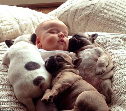 Ребенок и щенки