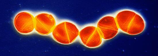 Большое количество бактериальных клеток и разрушающихся клеток иммунной системы образуют гной в носовой слизи.