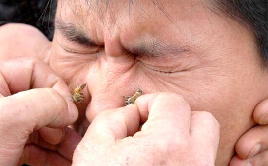 Лечение насморка пчелами