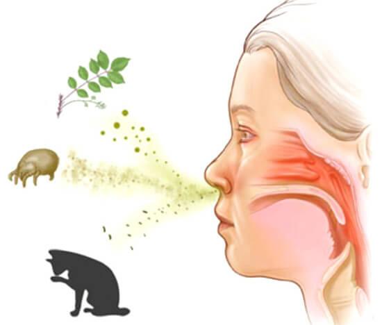 На сегодняшний день выявлено огромное количество веществ, которые потенциально могут вызвать аллергические проявляения.