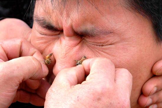 Лечение насморка укусами пчел