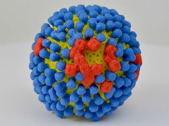 Вирион гриппа