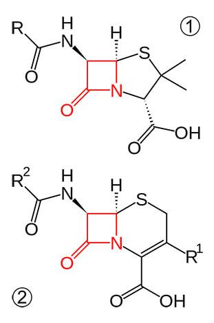 Структура молекул пенициллина и цефалоспорина