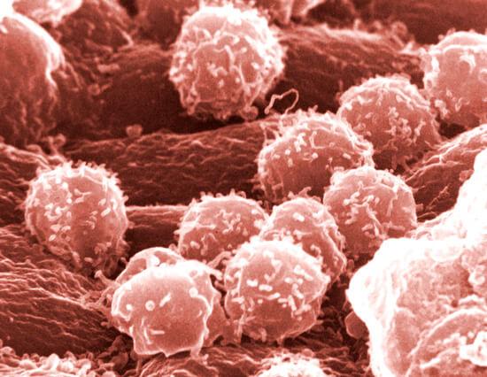 У взрослого человека иммунитет достаточно силен для того, чтобы не допускать заражения организма грибками.