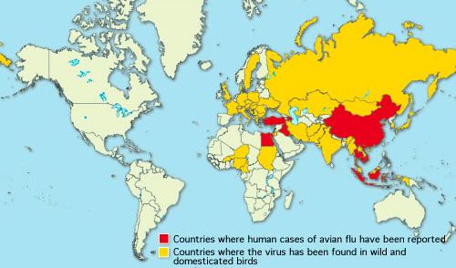 Как видим, в России, Украине, Казахстане и Беларуси пока зарегистрированы только случаи заболевания перелетных птиц, в Америке болезнь вообще отсутствует.