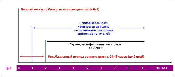 Хронология развития инфекции при свином гриппе. Как правило, больной становится заразным ещё в инкубационном периоде заболевания.