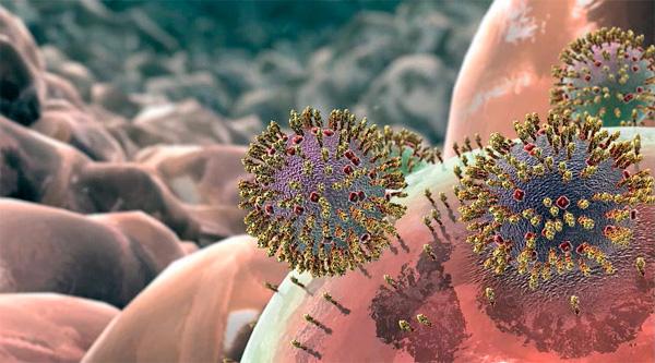 Задача интерферона - давать соседним клеткам сигнла об опасности, псле которого их мембраны начнут укрепляться, а вирусные частицы вовнутрь не проникнут.