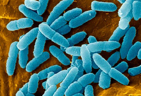 Чисто гипотетически действующий компонент Гриппферона мог бы быть полезен только при вирусных инфекциях.