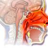 Подробно о лечении хронического насморка