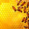 Правда ли, что при ангине нельзя есть мед?