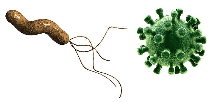 Отличие бактериальной ангины от и вирусной