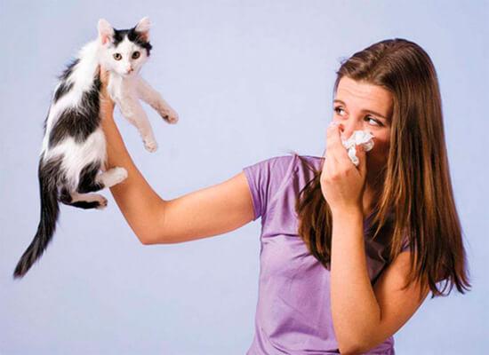 Аллергия на шерсть кошки