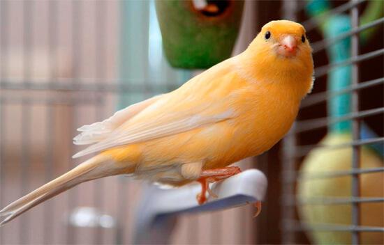 Птицы в доме