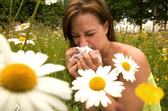 Девушка чихает возле ромашек