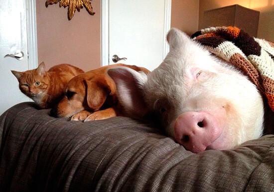 Домашние животные на диване