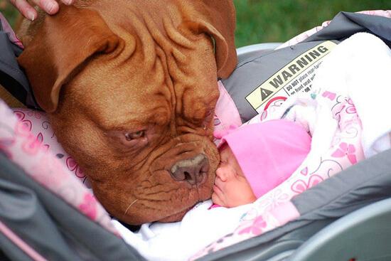 Собака нюхает младенца