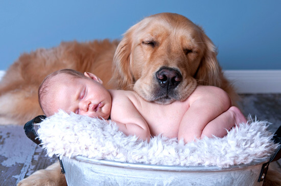 Шерсть домашний животных негативно сказывается на здоровье ребенка.