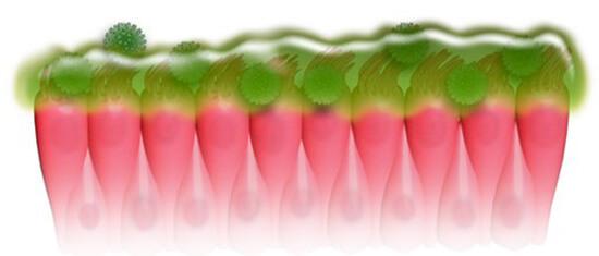 Деконгестанты снимают отек и приостанавливают выработку слизи в полости носа.