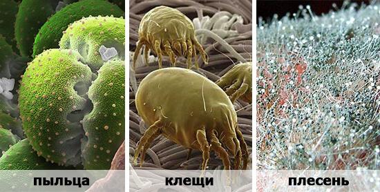 Распространенные аллергены: пыльца растений, плесень и пылевые клещи