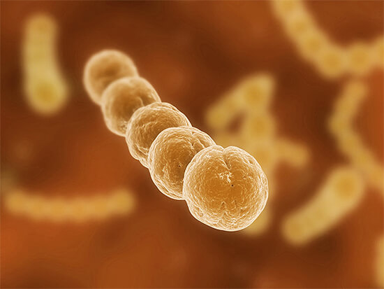 Недолеченная стрептококковая инфекция способна вызвать куда больше осложнений и поражений внутренних органов, чем грибковая. Последняя, к тому же нередко проходит сама.
