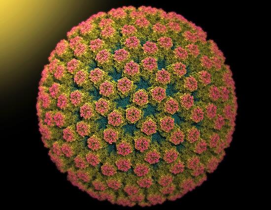 Ротавирус характерен тем, что помимо нарушения пищеварения он же вызывает боли в горле и насморк, которые иногда принимаются за ангину.