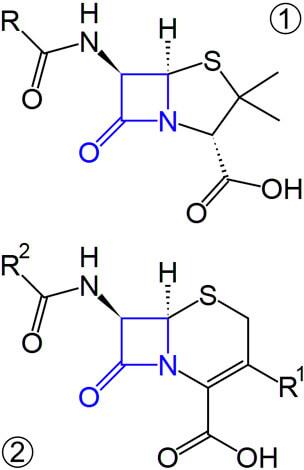 Если бактерия приобретает способность расщеплять указанное кольцо, она становится неуязвимой к антибиотикам. Если у больного вырабатывается гиперчувствительность к этому компоненту молекул, у него будет развиваться аллергия и на пенициллины, и на цефалоспорины.