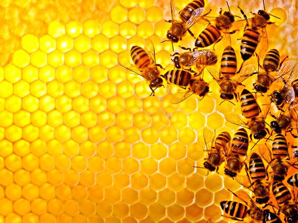 Мед не относится к числу продуктов, однозначно вредных для больного ангиной.