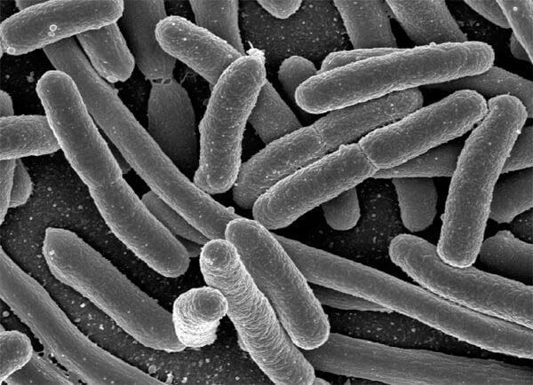 Нормальная микрофлора носовых путей - один из защитников организма от патогенных бактерий. Если эту микрофлору подавить антибиотиком, с большой вероятностью разовьётся осложнение.