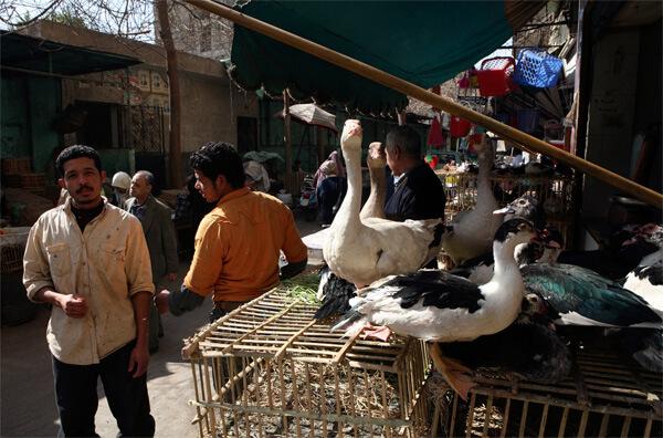 В Китае сельскохозяйственные рынки - одно из важных мест циркуляции инфекции в населенных пунктах.