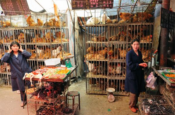 Большинство заболевших птичьим гриппом - крестьяне и работники птицеферм.